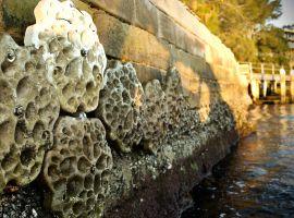 Do oceánů zanesených plastem mají vrátit život unikátní mořské hráze