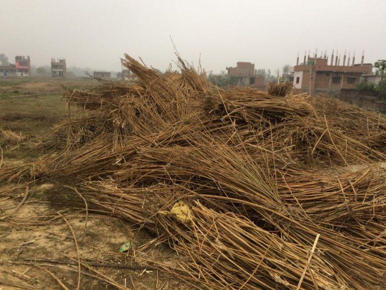 konopi v indii roste po tisiceleti stale vsak je jeho vyuziti jeste v plenkach