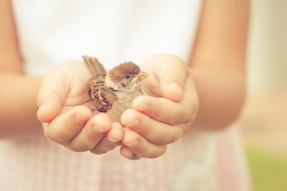Jak ve světě zaměřeném na výkon vychovat laskavé dítě