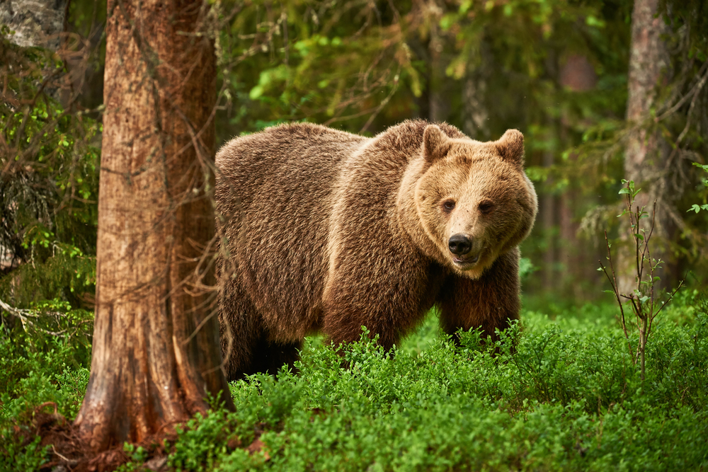 Medvědi dobře vědí, že turisti nemaj zbraně